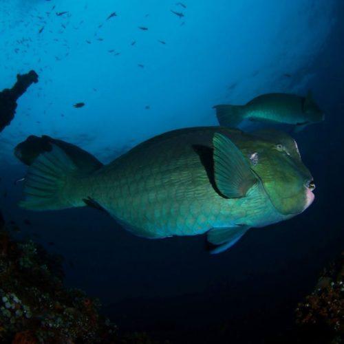 ADI Advanced Open Water Course (5 dives)
