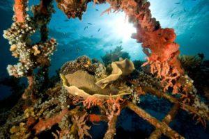 header - pemuteran and bio diversity