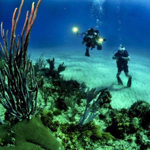 2-scuba-diver-underwater-37542