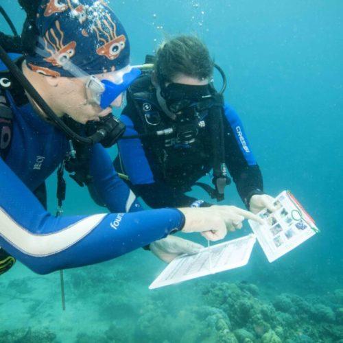 ecodiver reef check2