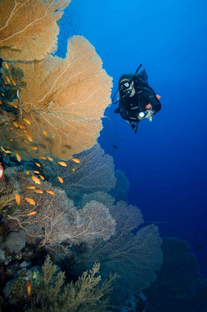 MANTAS AND WRECK ADVENTURES OVERNIGHT - 3 days / 2 nights for Certified Divers