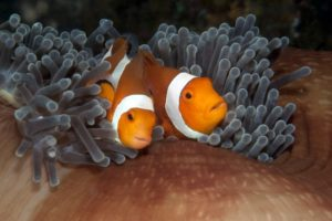 Pemuteran deep middle reef (2)