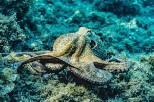 selective-focus-photography-of-octopus-3046629
