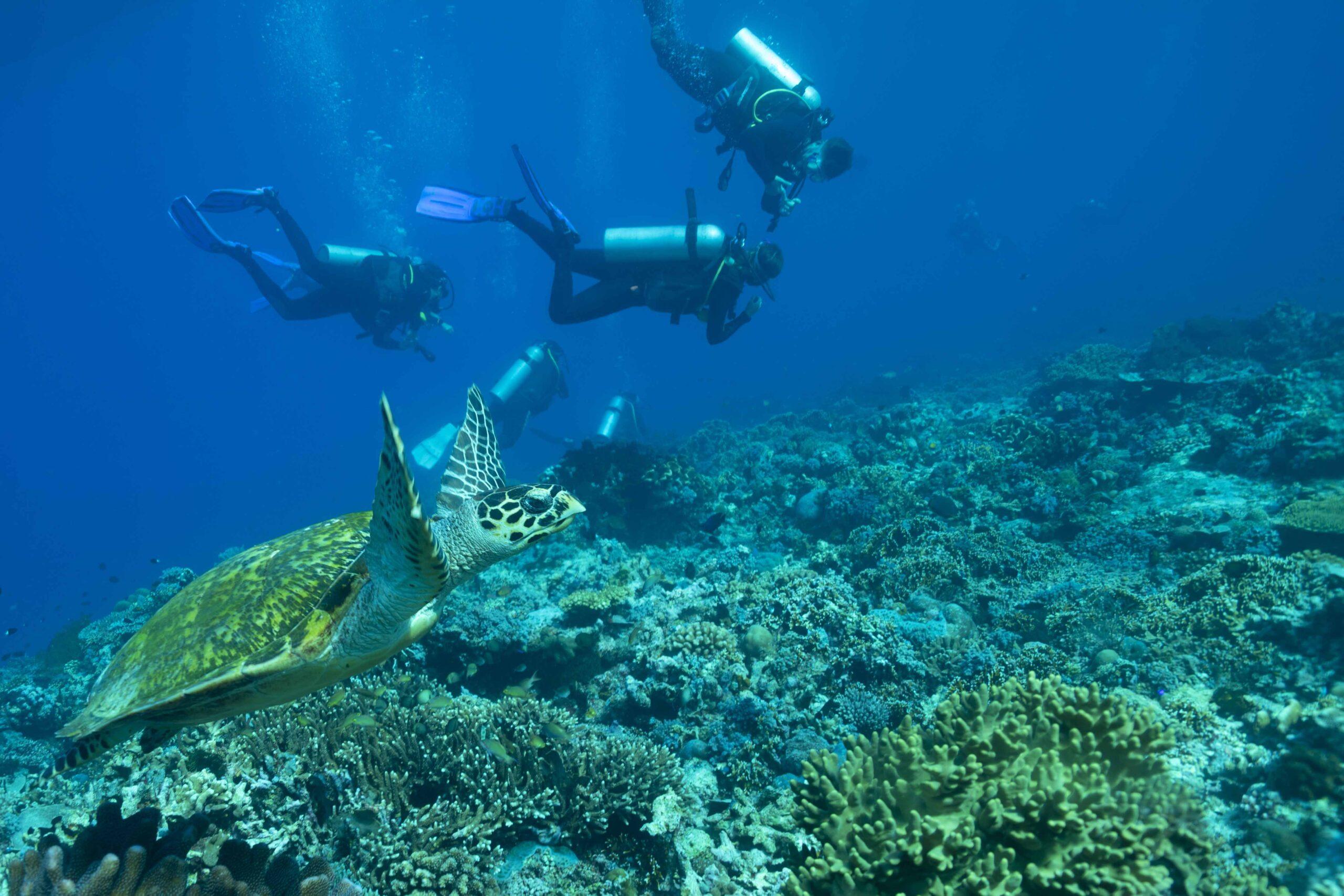 turtle-lembongan